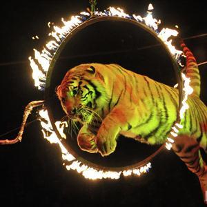 Цирки Казанской