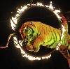 Цирки в Казанской